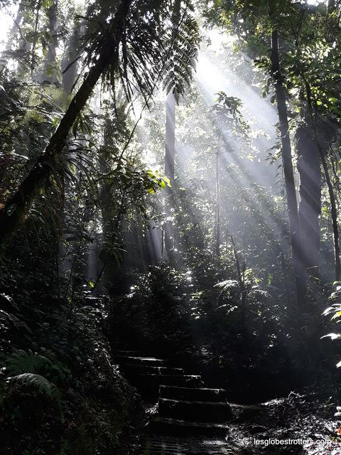 Monteverde, il pleut, il mouille, c'est la fête à la grenouille !