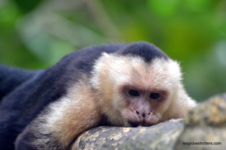 Quepos – Manuel Antonio, dernière étape, animalière, de notre séjour au Costa Rica